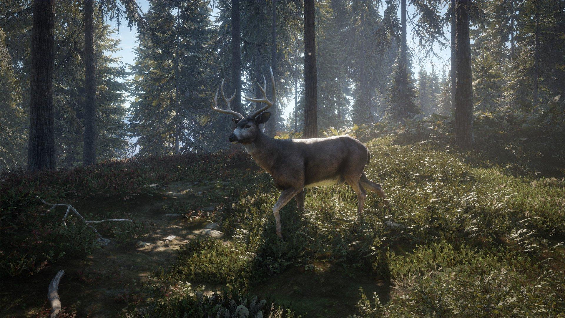 theHunter Call of the Wild 20